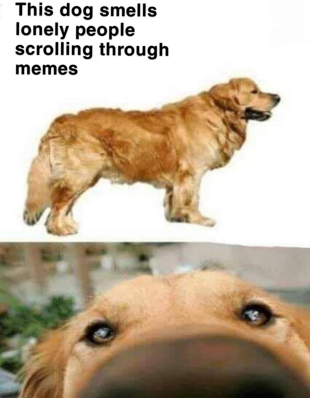 In my case, it's true - meme