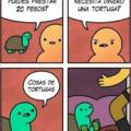 una capa la tortuga