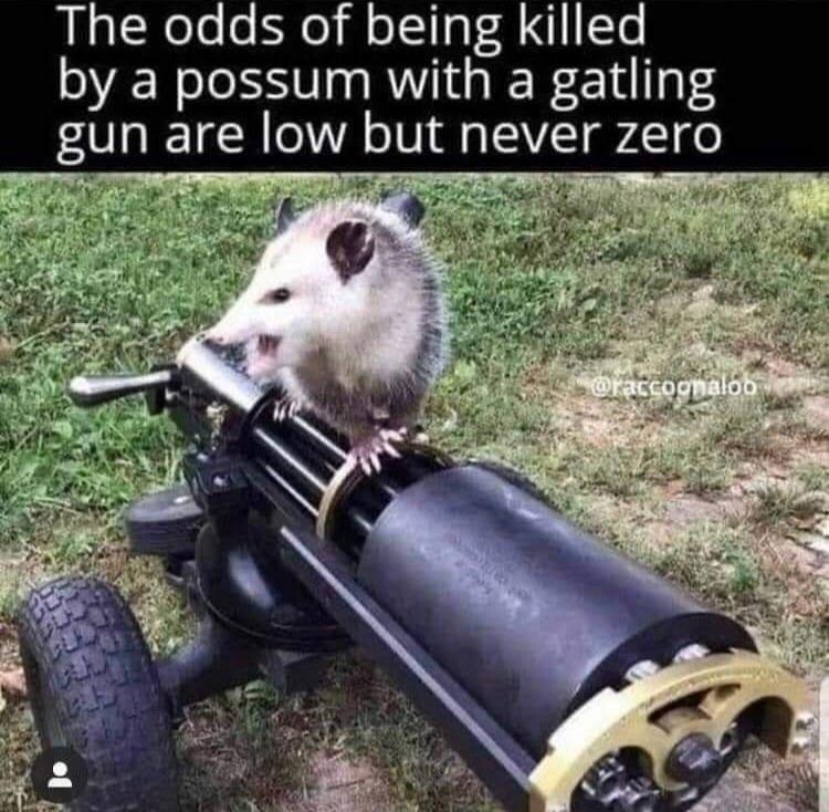 Possum Kingdom - meme