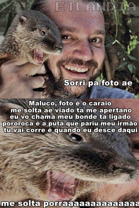 pororoca atacks again - meme