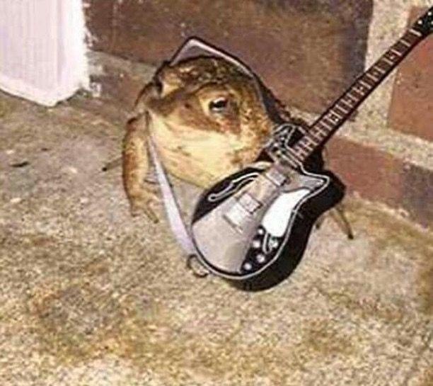 Sapo guitarrista - meme