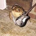 Sapo guitarrista