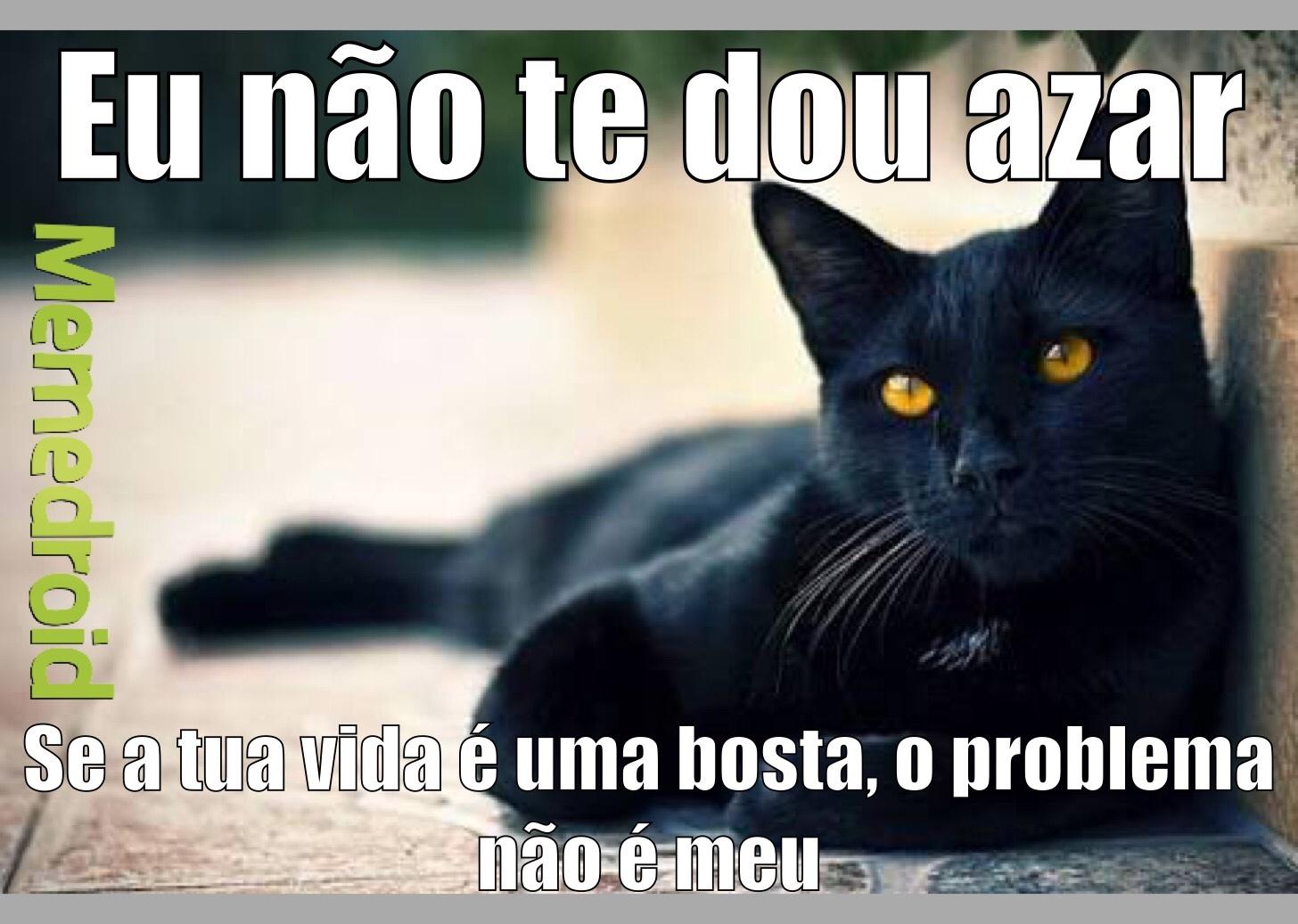 Gato preto, você me dá azar? - meme