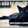 Gato preto, você me dá azar?
