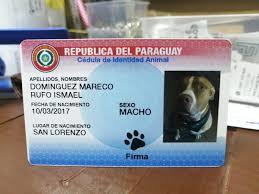 banda ahor aen mi pais estan haciendo carnet de identificacion para perros y la pilicia esta incautando todo esto - meme