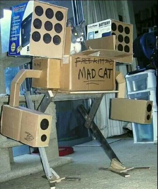 Rayos, un gato táctico - meme