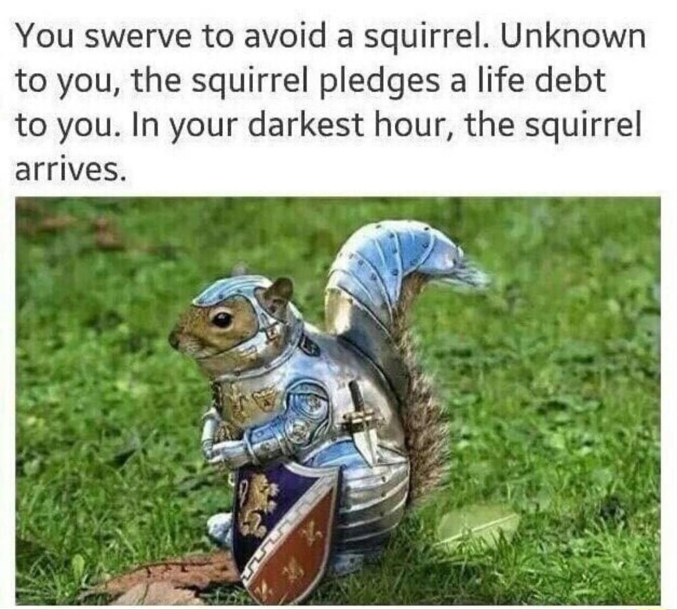 squorrel squahrrels - meme