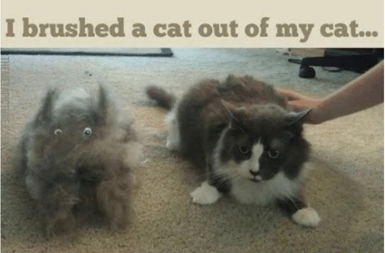 I brushed - meme