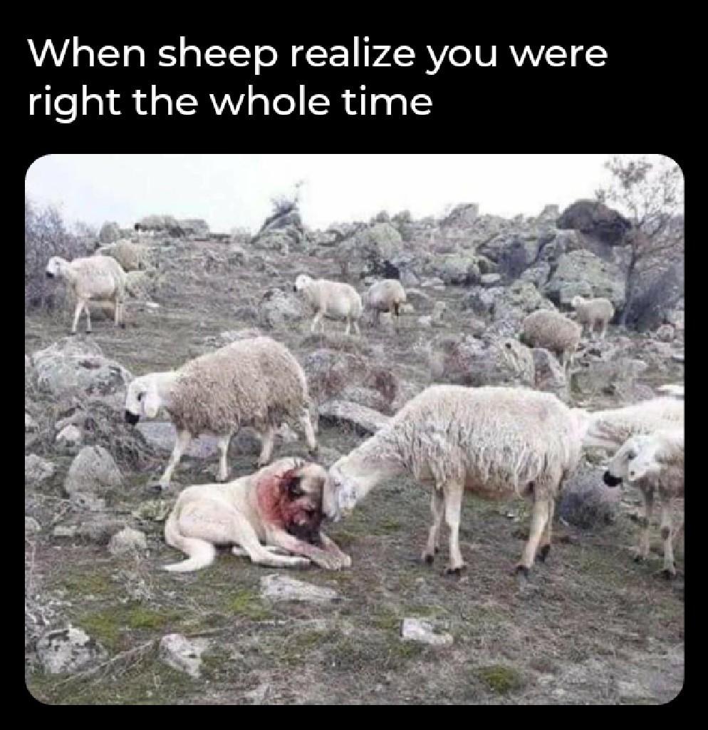 Wake up sheeple - meme