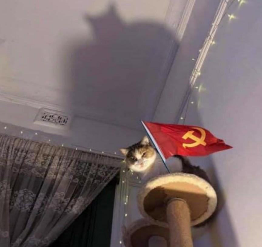 Mi gato se volvió comunista - meme