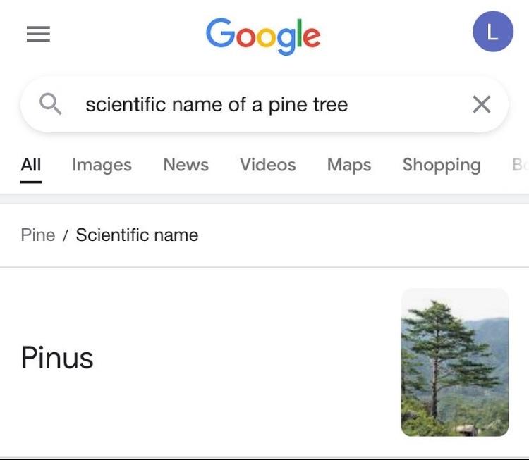 I have a huge pinus - meme