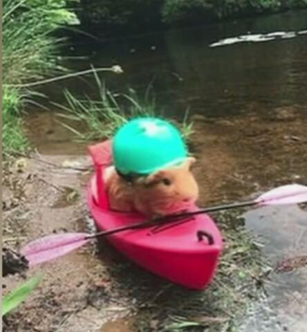 Ni se que publicar asi que les doy un hamster en kania - meme