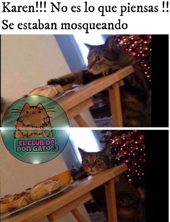 Moscas - meme