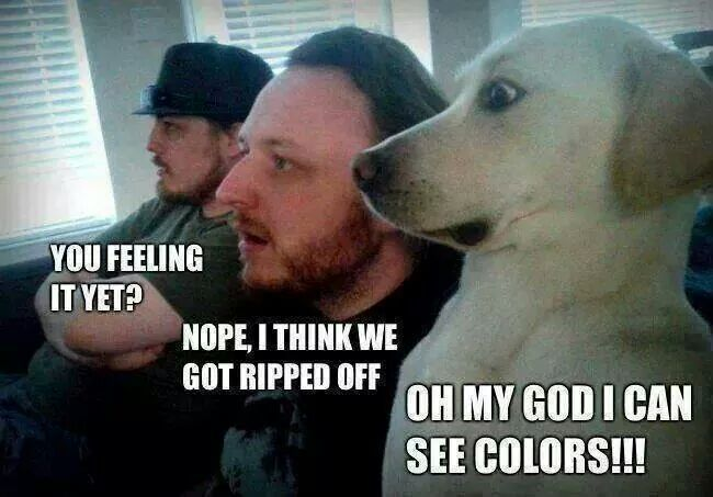 The dogs face - meme