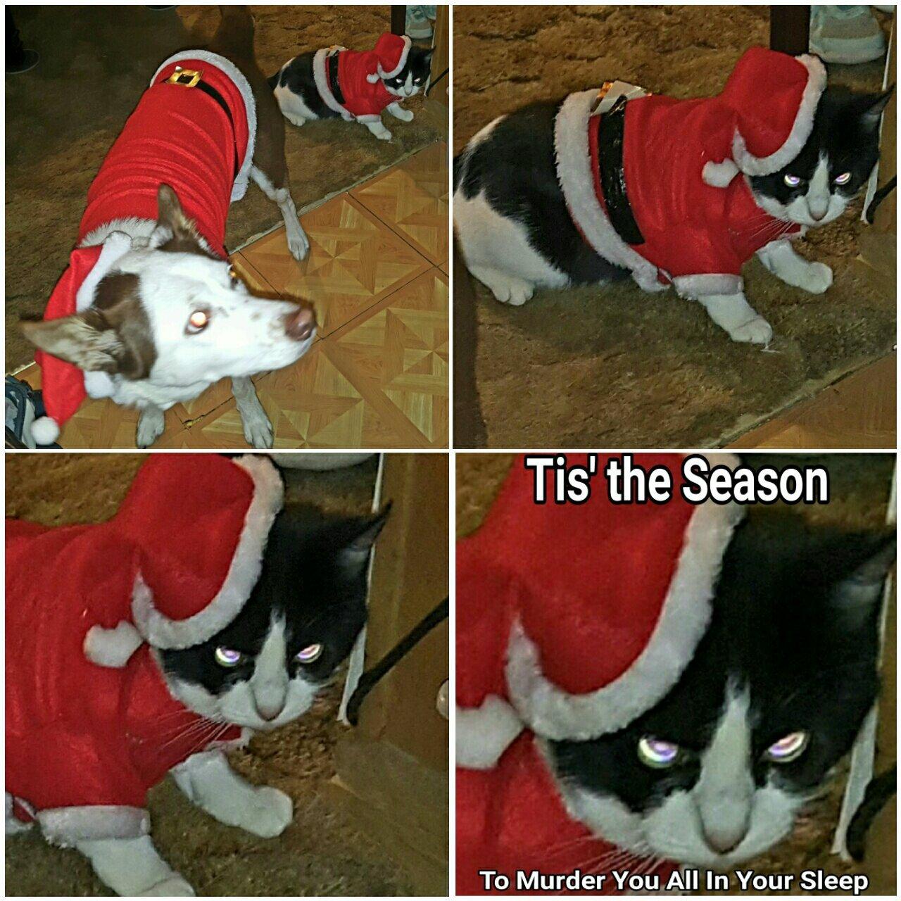 Nala and Kit say Merry Christmas, ya filthy animals! - meme