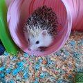 Flower loves her tunnel :)