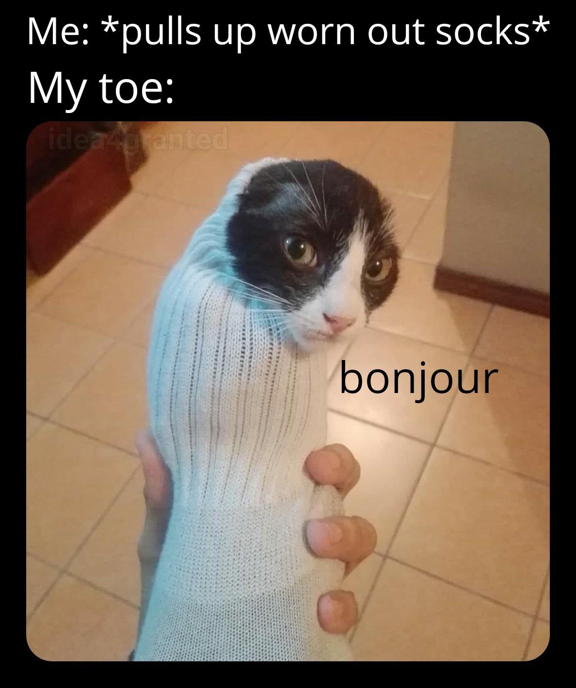french - meme