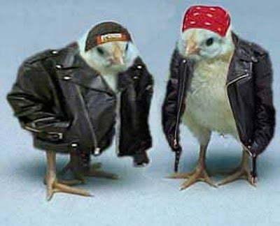 Biker Chicks - meme