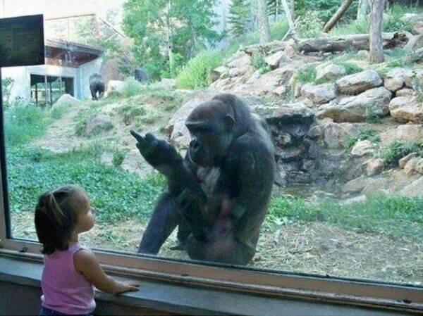 fun at the zoo - meme
