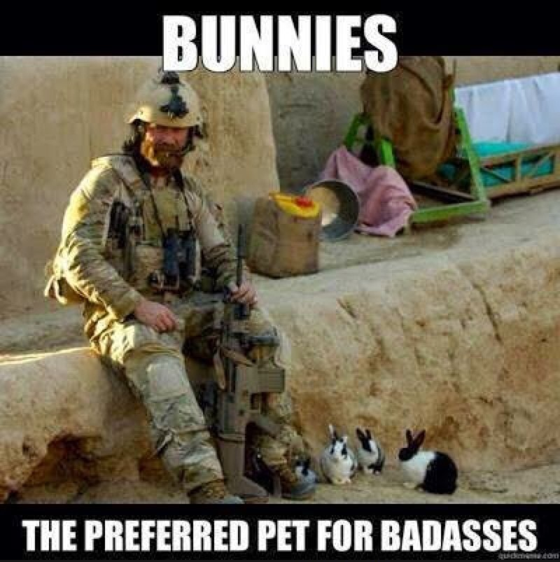 Badass bunnies - meme