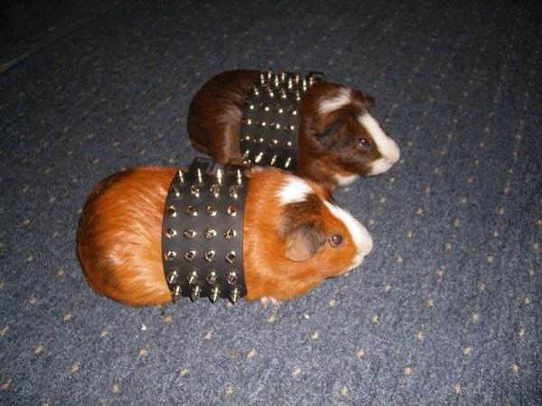 Hamsters Metaleros xd - meme