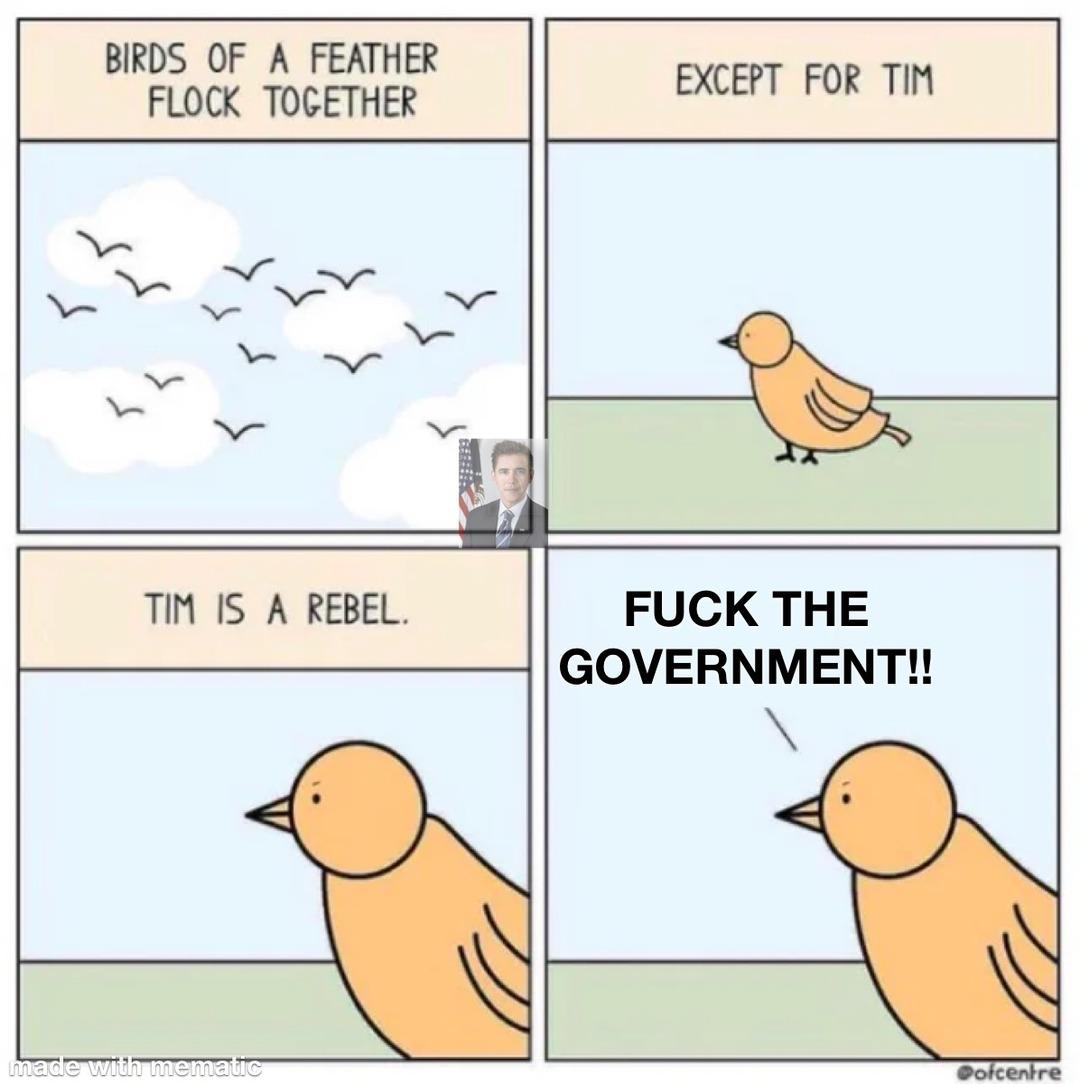 Tim the rebel bird - meme