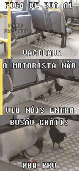 Malditos pombos - meme