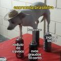 Cãozinho com chapéuzinho mexicano \(°_°)/