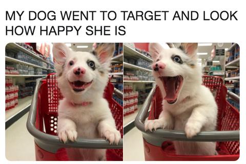 its so cute - meme