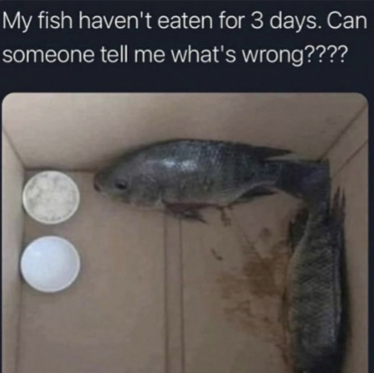 Please help my fish - meme