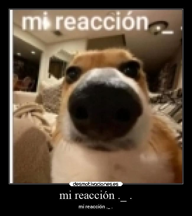 mi reaccion ._ . - meme