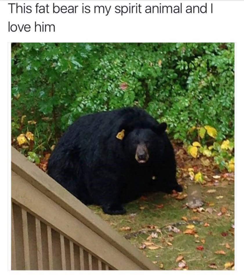 Tubby bear - meme