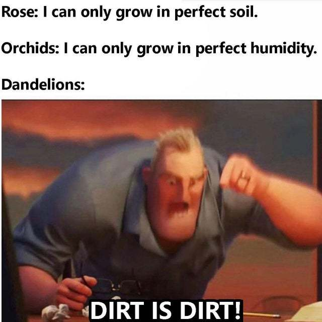 Dandelions are the best - meme