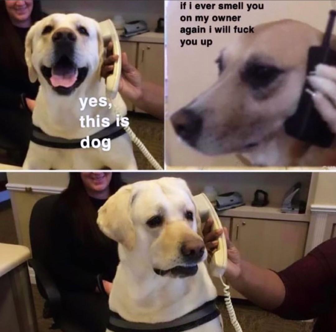 Waynent - meme