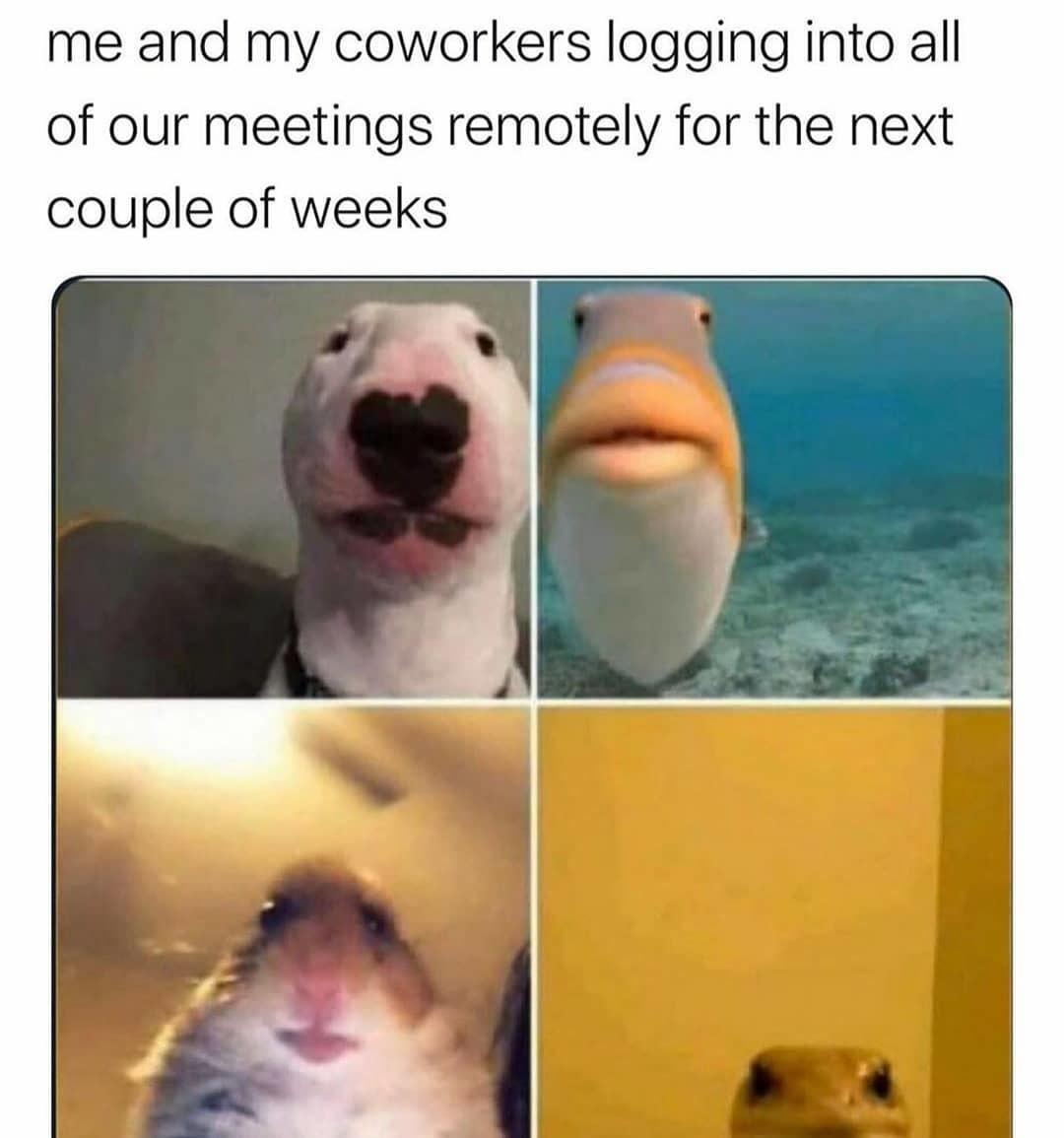 animals - meme