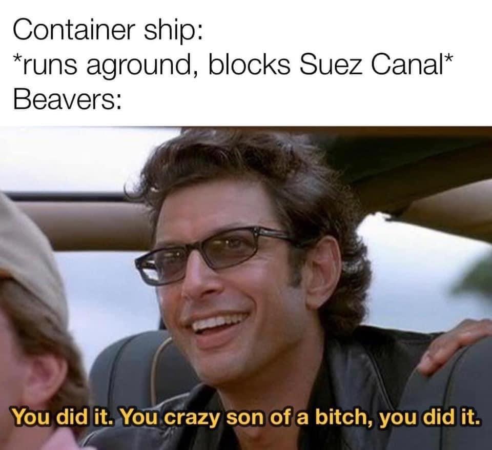 Beavers found their mama - meme