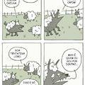 Po ovelha