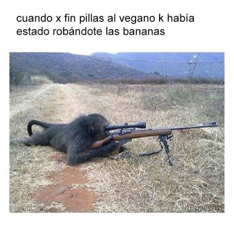 El mono francotirador - meme