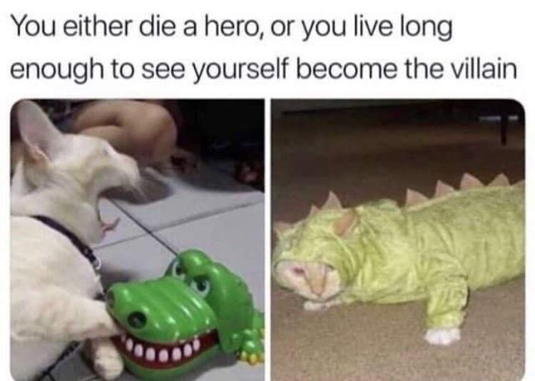 gater cat - meme