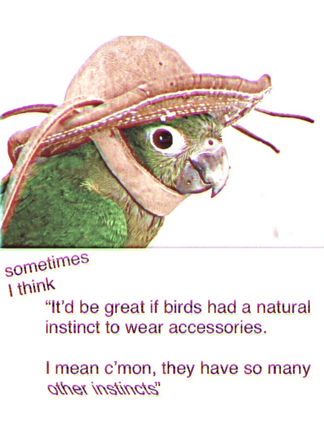 pretty bird - meme