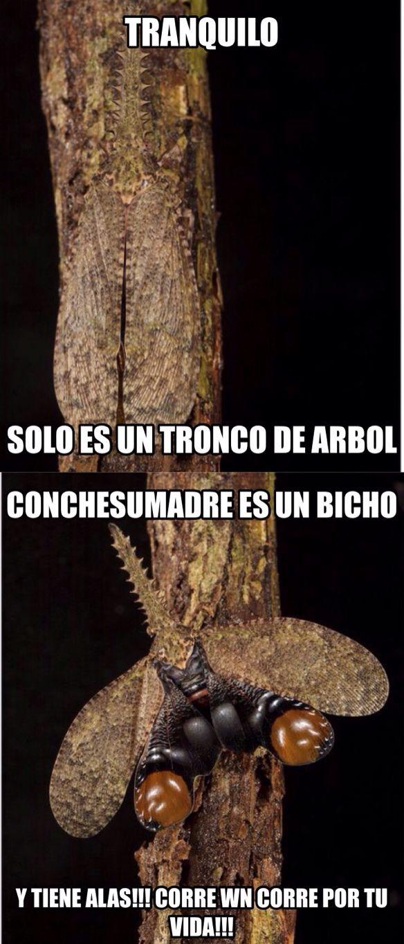 Bicho!!! - meme