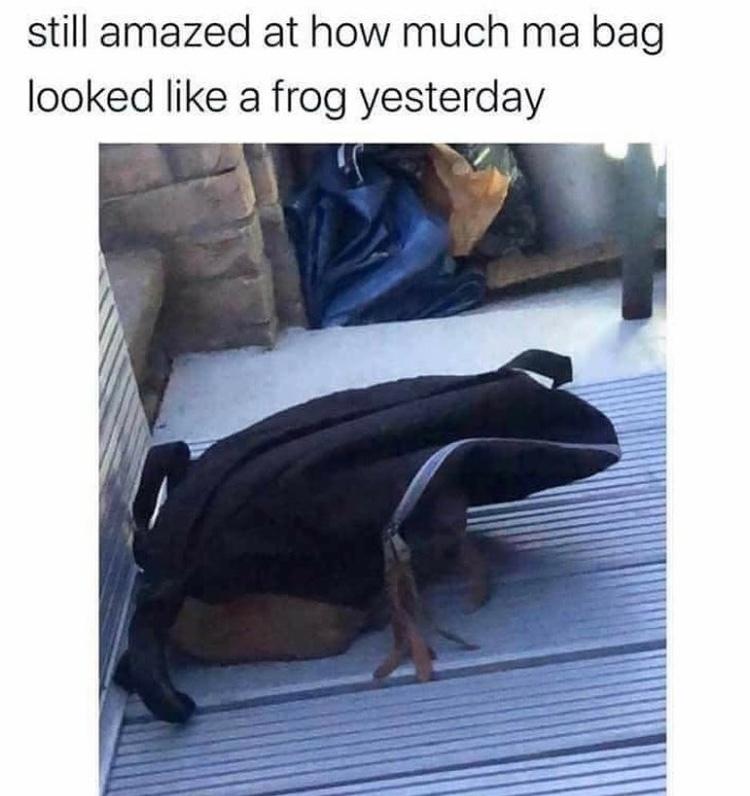 frog bag - meme