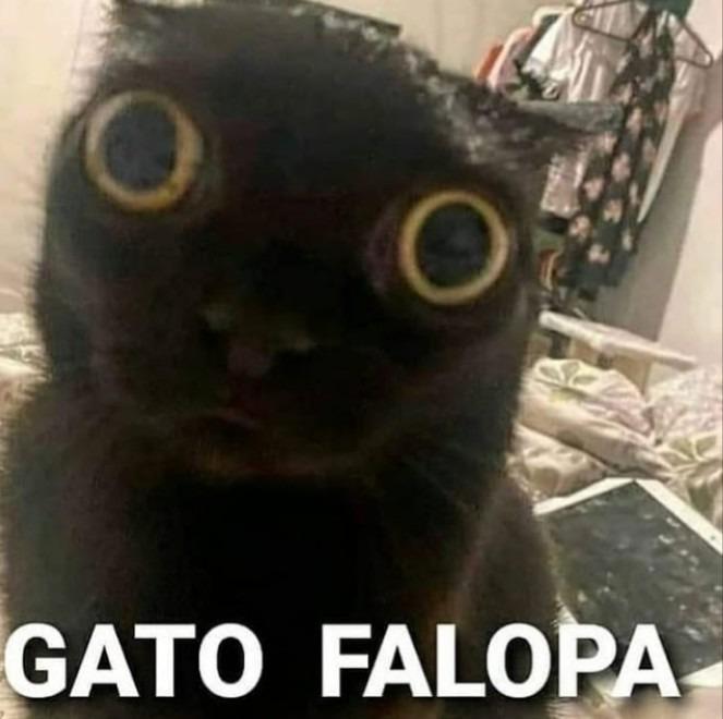 No se droguen cómo lo hizo este gato - meme