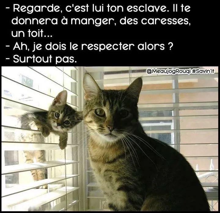 Les chats  - meme