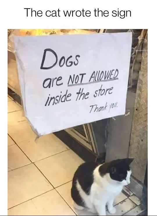 cat owns the store - meme