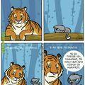 Tigre<Gato