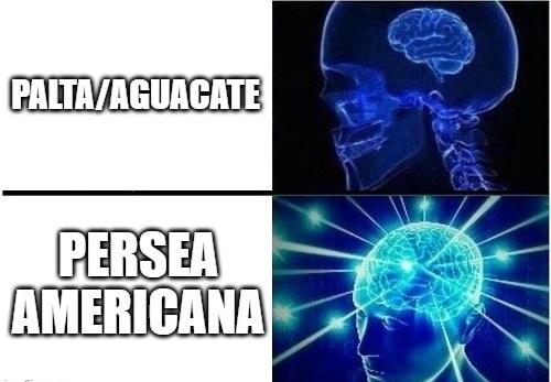 Meme meco #4 (no se si es repost)