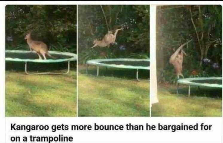bounce - meme