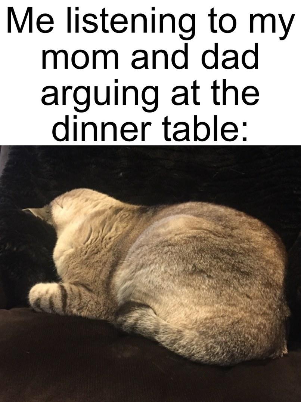 Overwhelmed Gracie - meme