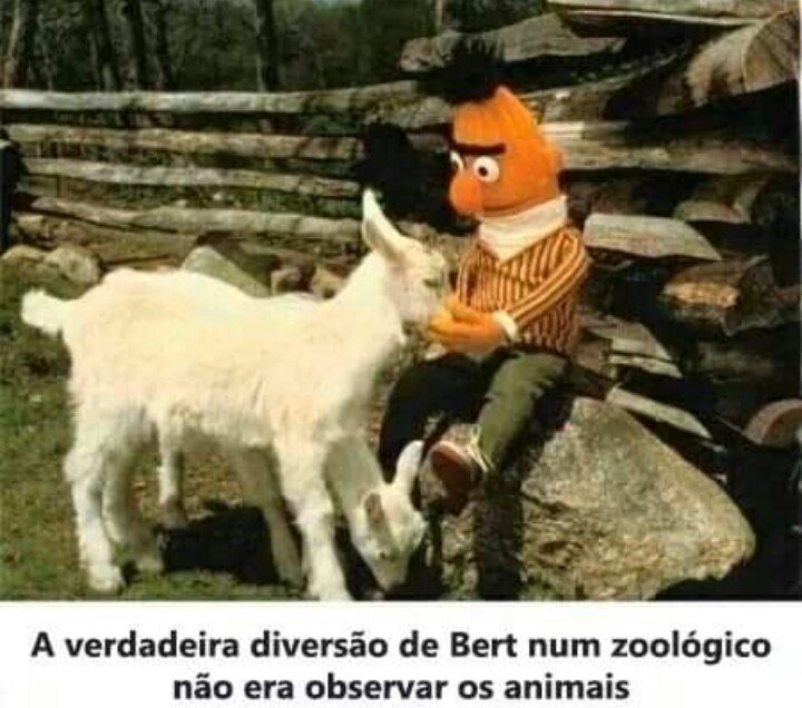 Bert do nordeste - meme